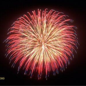 1000. Hoa cúc đỏ - Red Peony -21chemical