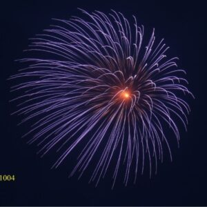 1004.Hoa cúc tím Purple peony -21chemical