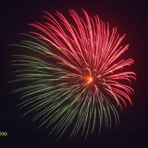 1500. Hoa cúc nửa đỏ nửa xanh lục Haft red & half yellow peony -21chemical -21chemical