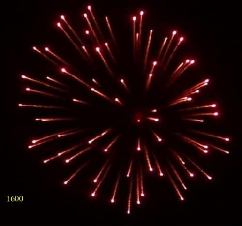 1600. Hoa cúc đỏ chuyển nổ lốp bốp Red to crackle peony -21chemical
