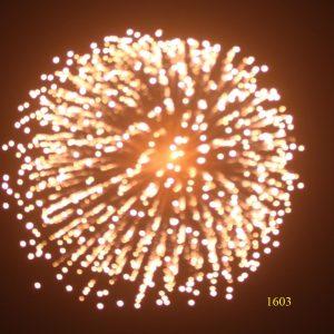 1603. Hoa cúc vàng chuyển nở lốp bốp Yellow to crackle peony -21chemical