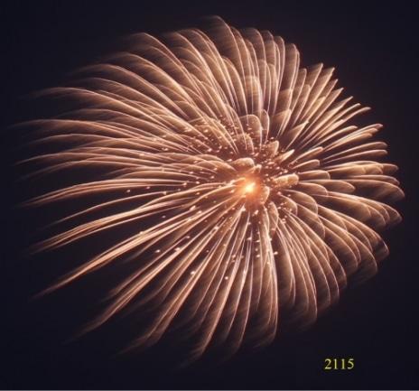 2115. Hoa cúc cánh lấp lánh Reddish gamboge to glittering gold -21chemical