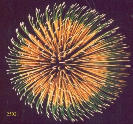 2501. Hoa cúc vàng sẫm chuyển xanh lục Brocade chry to green -21chemical