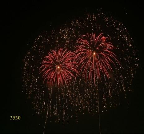 3530. Sóng vàng lấp lánh nhụy đỏ Glittering gold to ripple chry with red pistil -21chemical