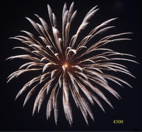 4300. Mưa bạc Sliver kamuro chrysanthemum -21chemical