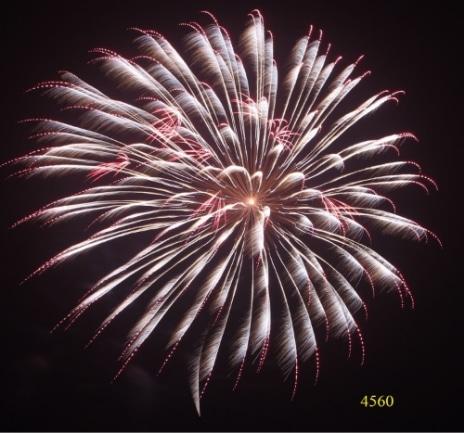 4560. Mưa bạc chuyển nhấp nháy đỏ và chùm hoa đỏ Sliver kamuro to red strobe with red small shells -21chemical