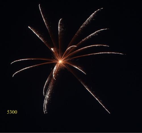 5300. Lá cọ vàng lấp lánh Broom comet chrysanthemum -21chemical