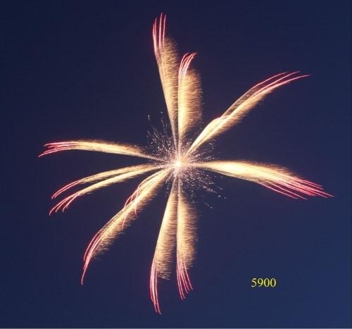 5920. Hoa dã quỳ vàng sẫm và đỏ lấp lánh Brocade & red octal cluster -21chemical
