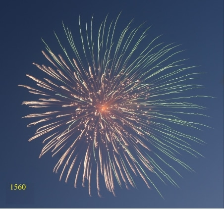 1564. Hoa cúc nửa xanh lơ nửa vàng nhụy sóng vàng lấp lánh Hafl blue & half yellow peony with gold ripple pistil -21chemical